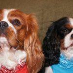 Przysmaki dla każdego psa