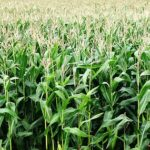 Walka w chwastami poprzez odpowiednie herbicydy